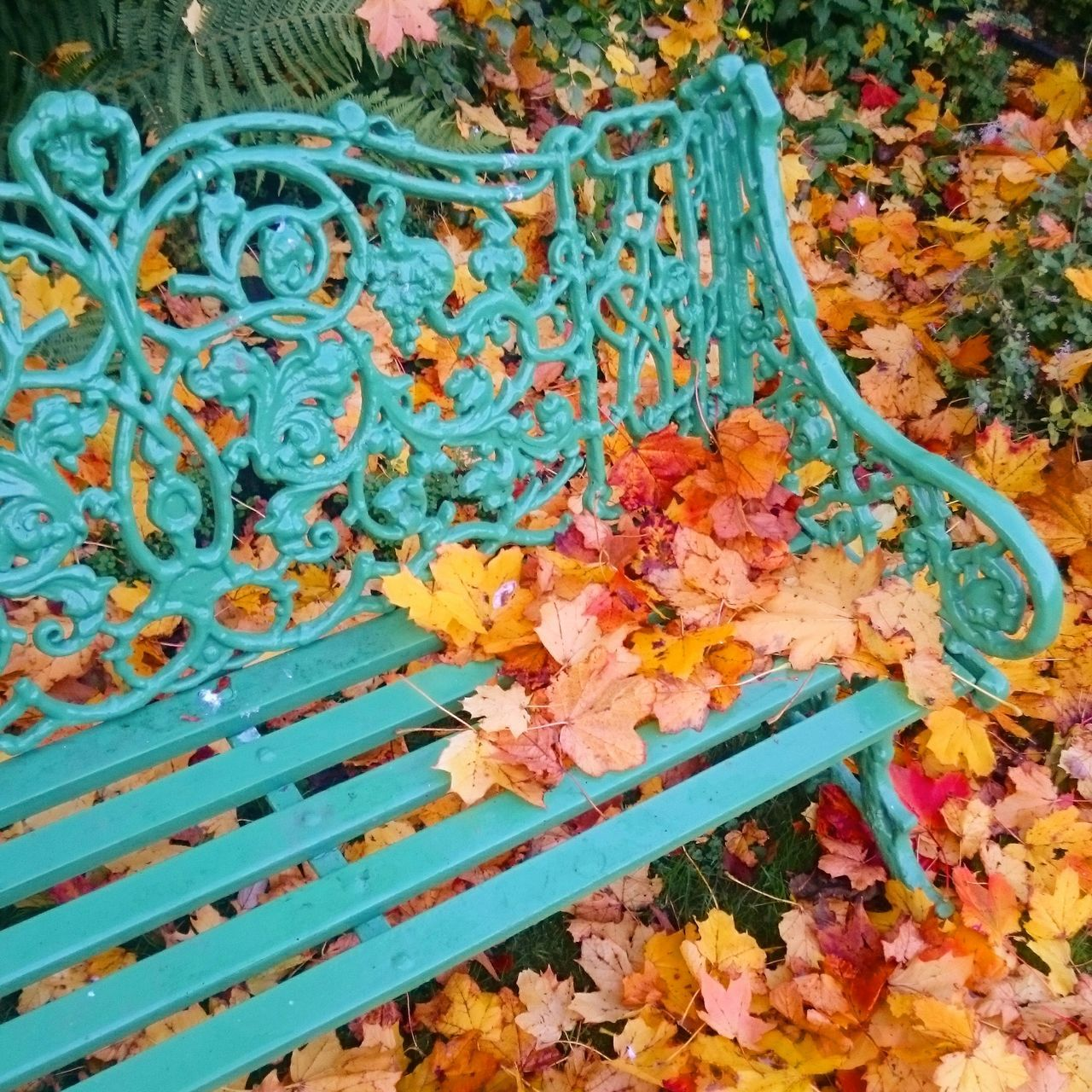 High Angle View Close-up Outdoors Day The Way Forward Autumn Leaves Relaxing TakeASeat Seat Freshness Autumn Tranquility