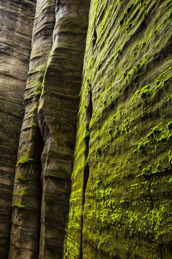 Adršpach, Czech Republic Adršpach Adršpachské Skály Czech Republic Backgrounds Beauty In Nature Day Green Color Low Angle View Nature No People Outdoors Rock - Object Teplicenadmetuji Textured