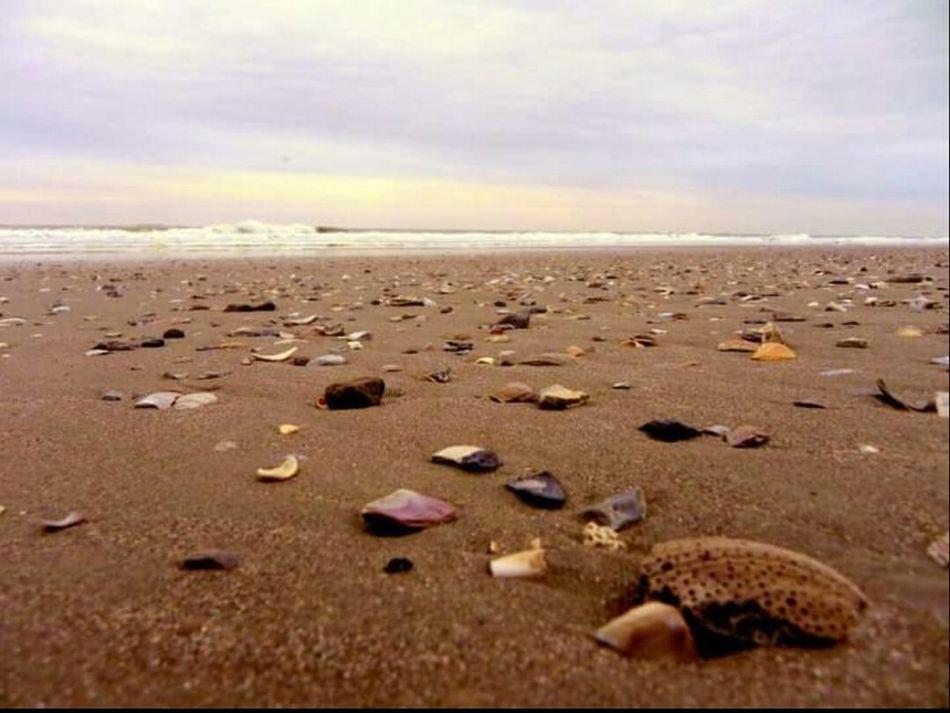 Shells Beach Beach Photography Closeup Textures And Surfaces