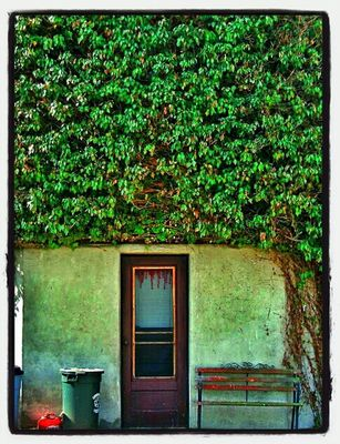 Vines at Greensburg,  Pa by David Baldinger