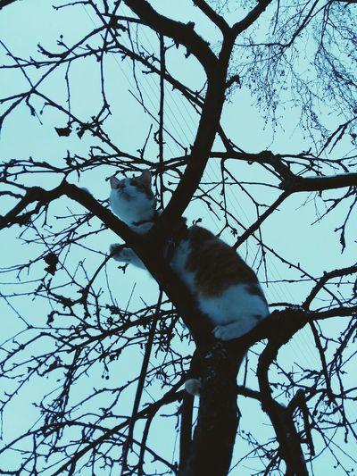 Meine Katzen Katzenfoto Cat Katzenliebe Cute Pets Babycat ❤ Playing With The Animals Katzen Katzen<3 Katzen 💜 Babycat🐱 Animals Cold