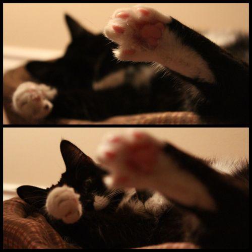My baby Cat Canonrebelt5
