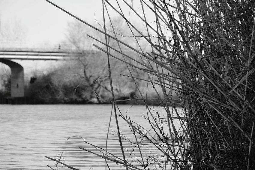 Focus On Foreground Blury Background Black And White Collection  Black And White Photography Nature_collection Begej River Peaceful Waters Zrenjanin Vojvodina Srbija Srbijauslikama