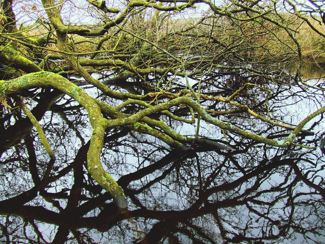 Mossy Branches over Water Pond Reflections Trees Moss Lichen Tangled Web of Wood