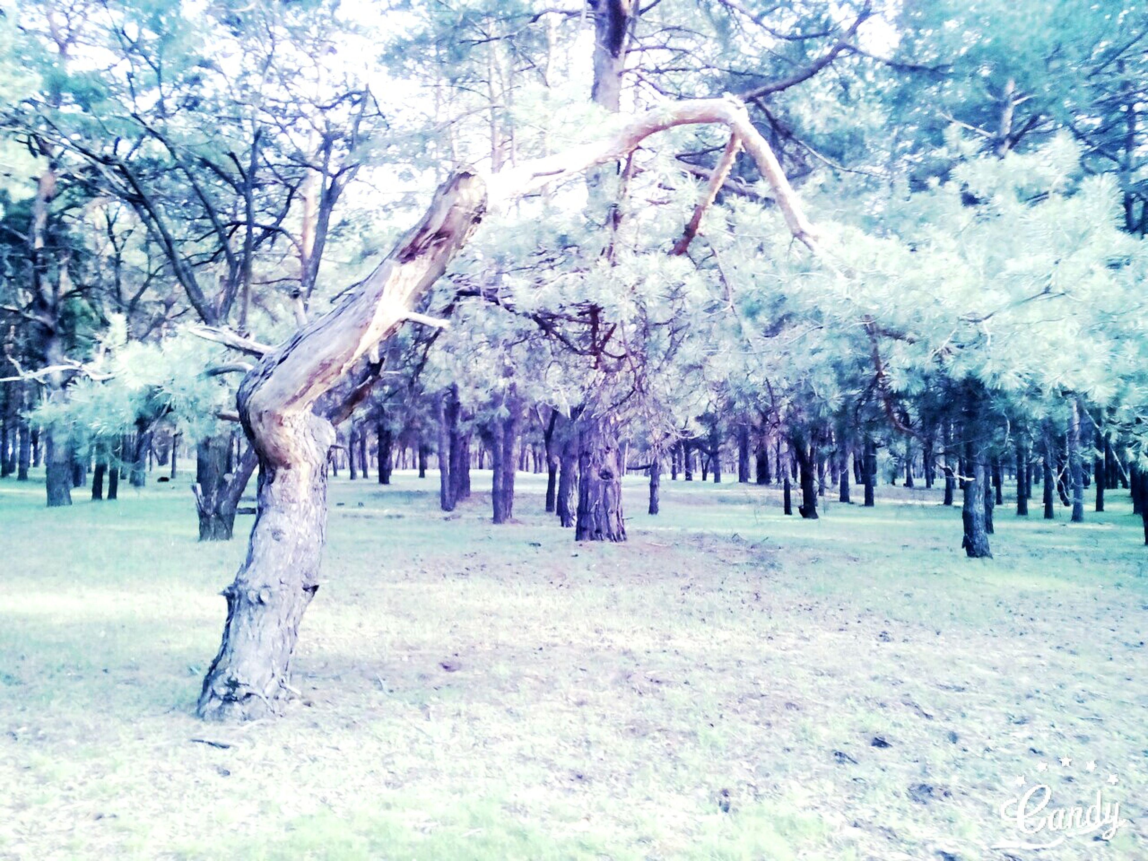 Hahahaha 😂😂😂😂😂 Wildbonsai Bonsai Tree