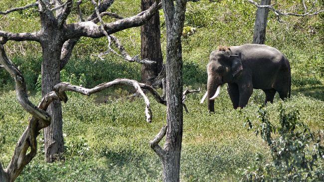 Elephant Wild Wildlife Photography Tusk Forest Wildlife & Nature
