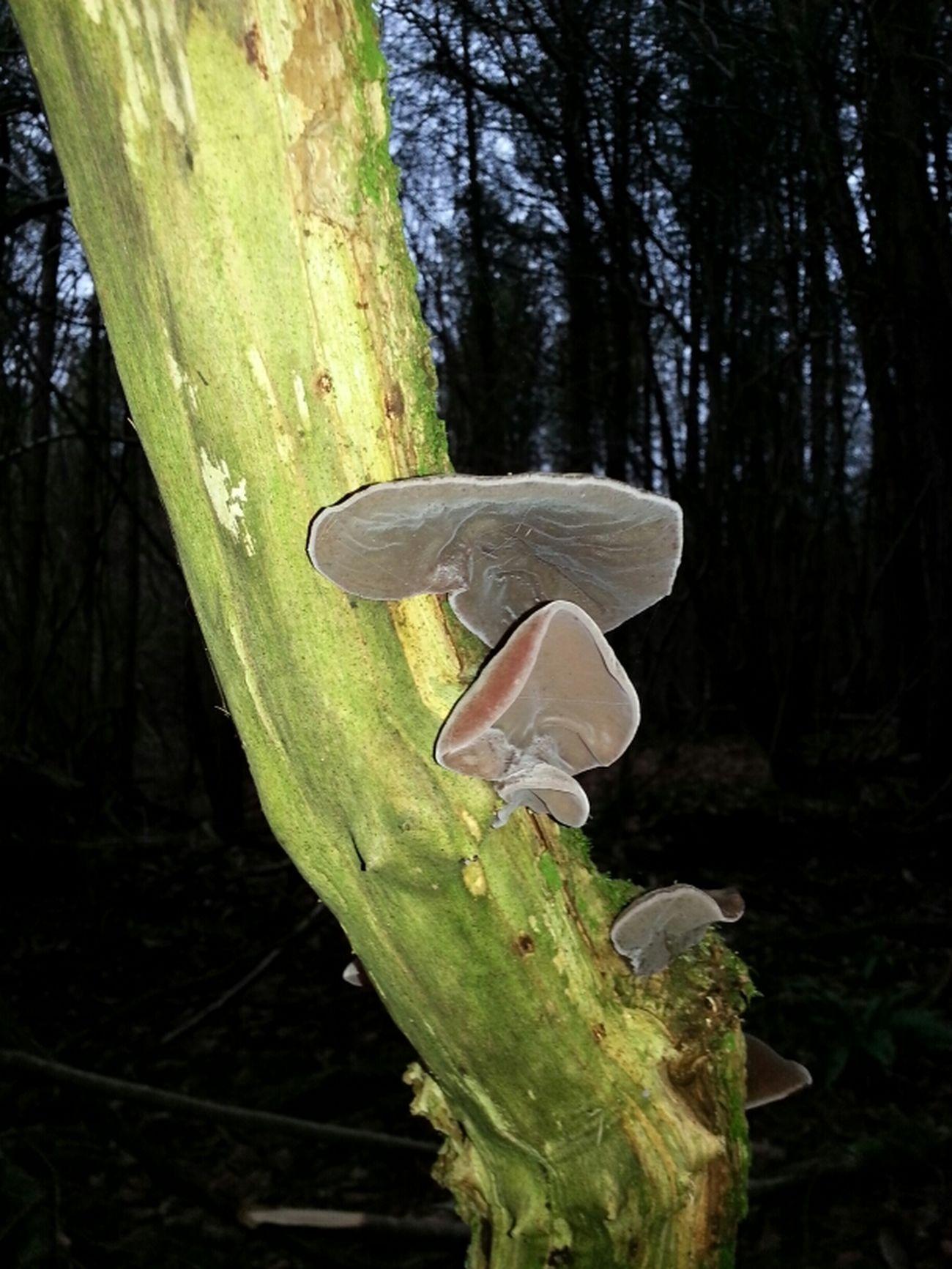 Fungie