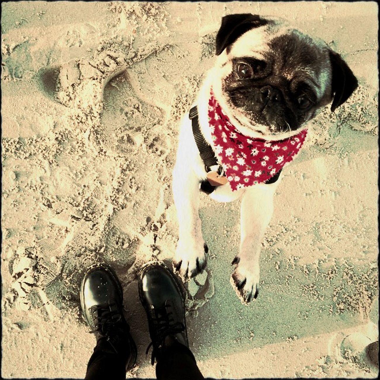 Sand Pug Dr. Martens EyeEm Best Shots