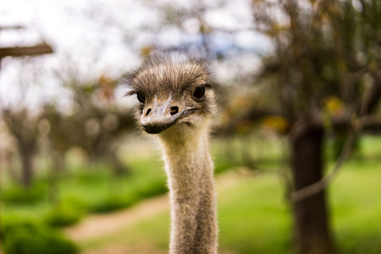 Monday --> Where is the next weekend Animal Wildlife Bird Close-up Look Stupid Monday Motivation Ostrich Portrait