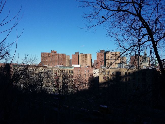 Harlem  area (where the photo journey now to be narrated started). · New York NYC NYC Photography Manhattan USA Blue Sky Cityscape Architecture Urban Landscape Framed By Trees Light And Shadow The Purist (no Edit, No Filter)