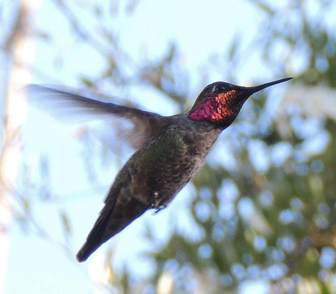 No time to stop and pose Hummingbird EyeEm Nature Lover Backyard Birder EyeEm Birds Bird Hummingbirds The Hummingbird Series