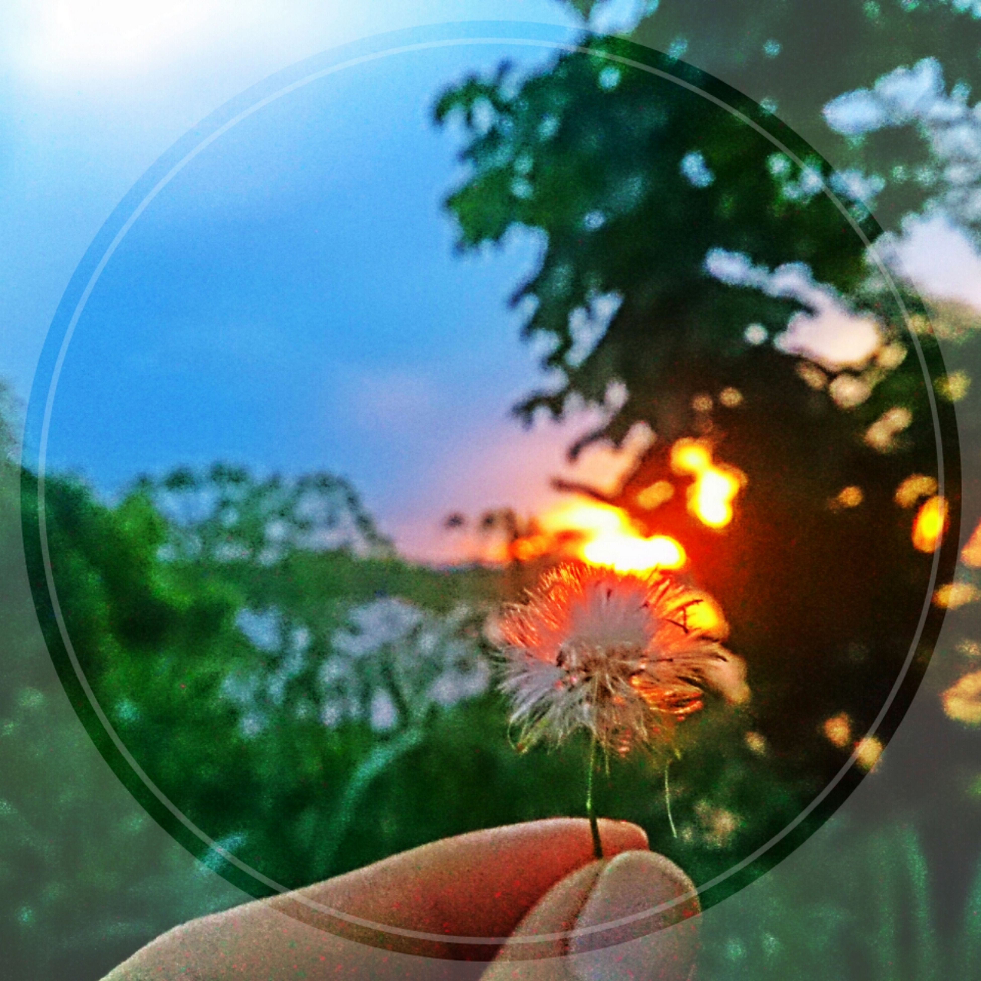 part of, person, cropped, one person, sun, focus on foreground, close-up, holding, personal perspective, lens flare, sunset, tree, sunlight, sky, nature, human finger, sunbeam, orange color, beauty in nature