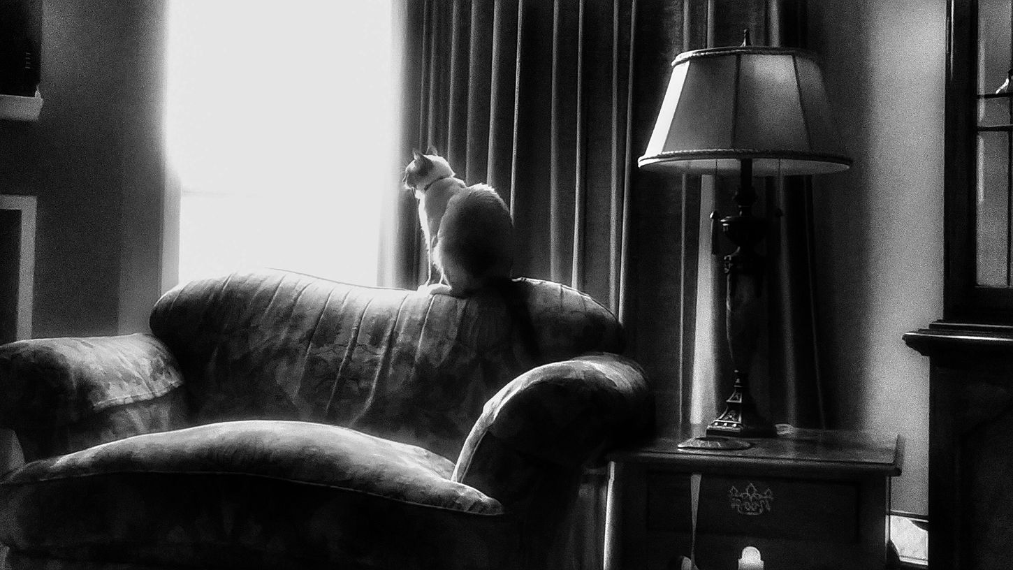 Getting Inspired Random Photo Time Pet Portrait Pet Lovers Cats Of EyeEm Cat Photography Looking Out The Window EmmieC Black And White Photography
