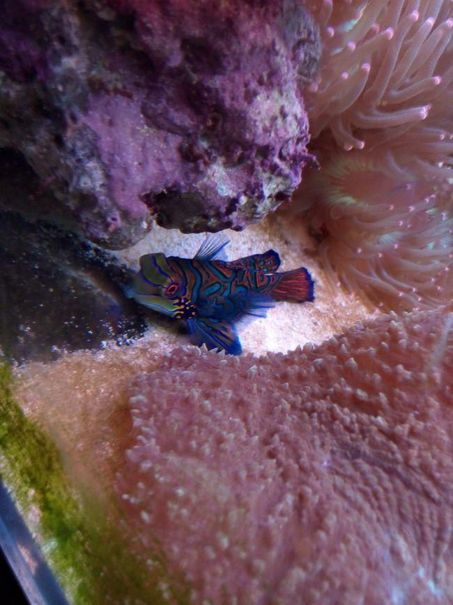 奇特的小鱼 Beautiful DayEnjoying Life Animal Photography Special Fish