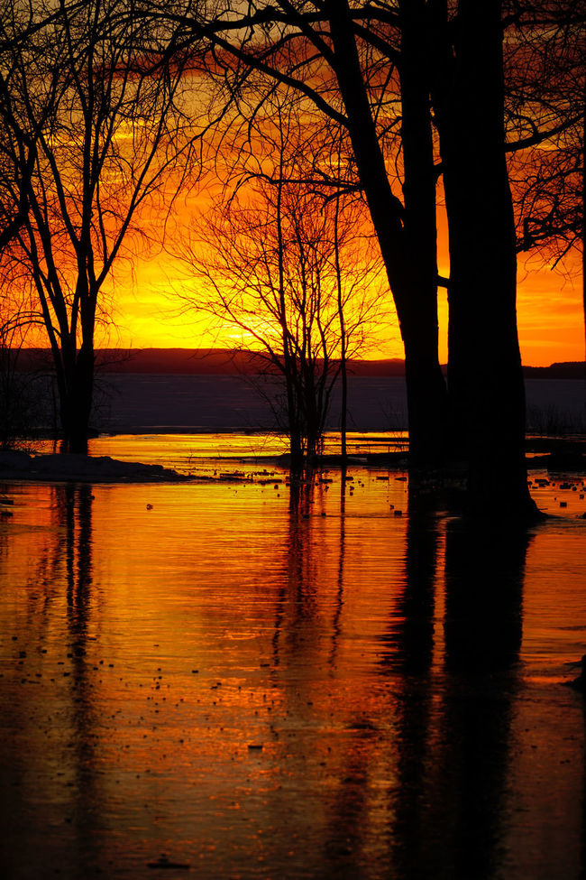 Time goes by so slowly... but Summer goes by so fast... chi ci capisce niente?! https://www.youtube.com/watch?v=EDwb9jOVRtU 18-105mm Bare Tree Beauty In Nature Branch Canada Coast To Coast Frozen Frozen Lake Idyllic Lake Majestic Non-urban Scene Orange Color Reflection Scenics Silhouette Sunset Tranquil Scene Tranquility Tree Tree Trunk Water Waterfront Winter Winter Time Winter Wonderland