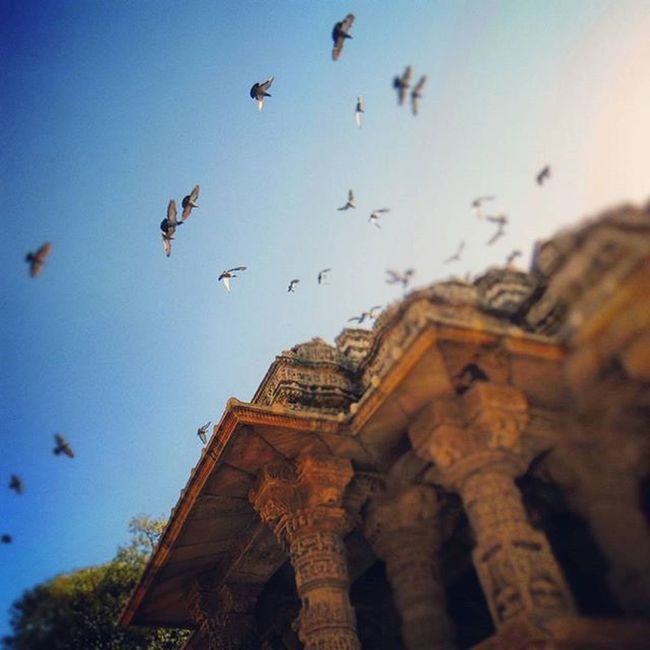 Don't be afraid to fly. Flying birds on the Modhera sun temple Bird Birds Flying Sunnyday Suntemple Sun Modherasuntemple Modhera Temple Gujarat Sunny Bluesky Sky Heritage Heritageplace Place Instalike Likes Love Instagood Instalove Iloveamdavad Beautiful