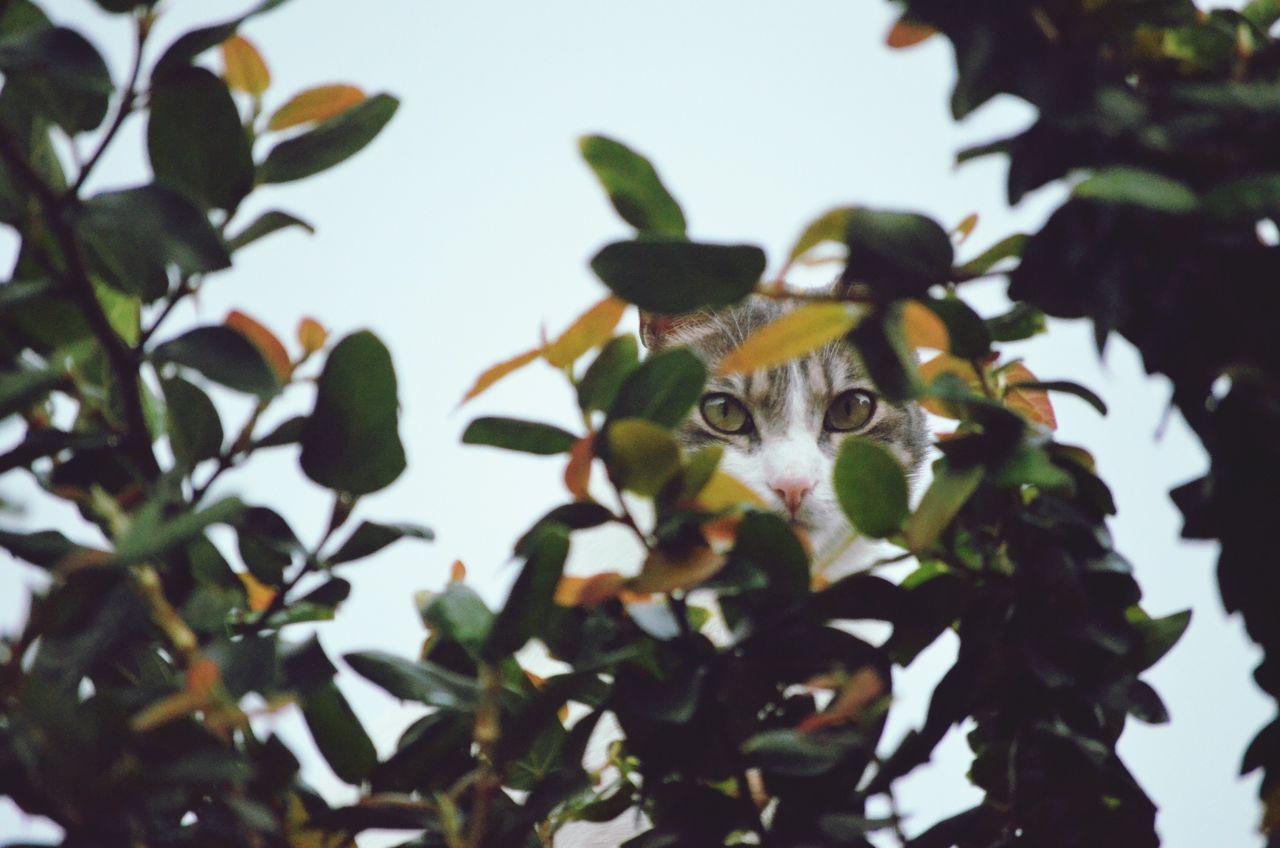 Cat Feline Friend Taking Photos The EyeEm Facebook Cover Challenge