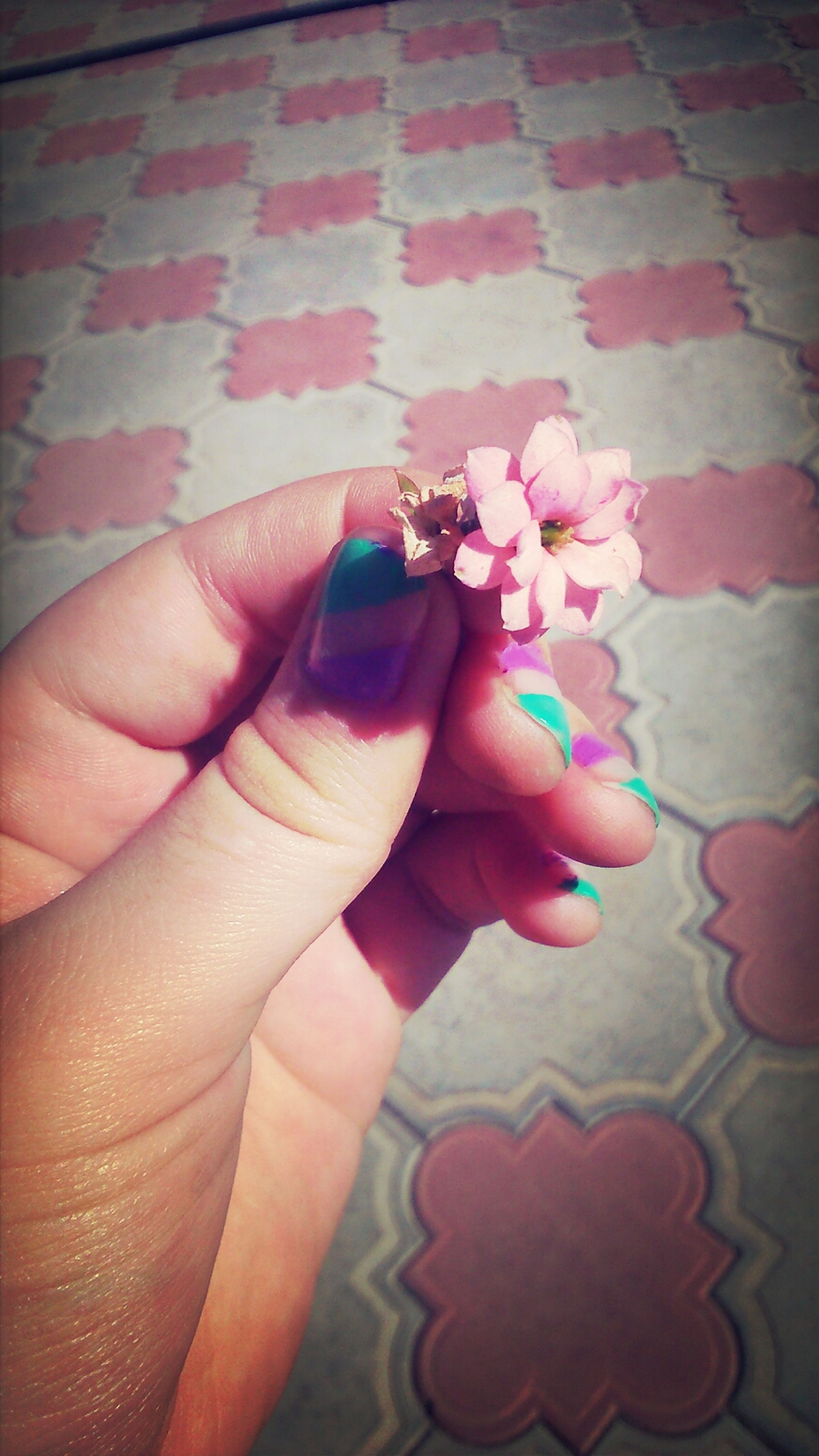 person, flower, holding, part of, indoors, human finger, cropped, fragility, wall - building feature, lifestyles, close-up, petal, pink color, unrecognizable person, high angle view, leisure activity