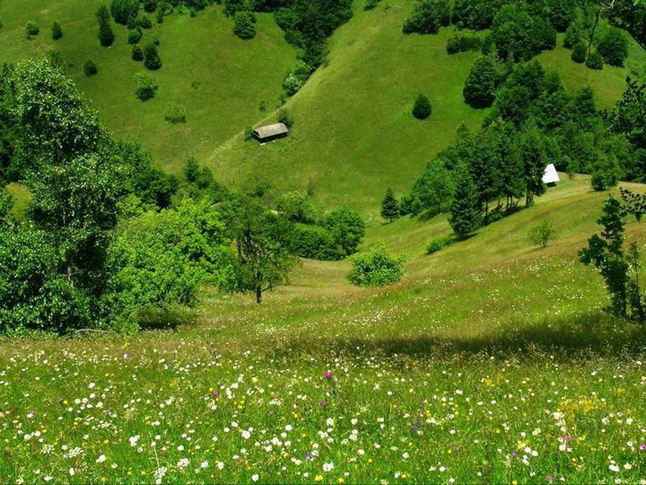 grass, field, nature, tree, green color, landscape, growth, no people, tranquil scene, scenics, tranquility, beauty in nature, outdoors, day
