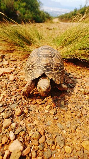 Why so shy little guy? Nature Outdoors Day Close-up Serene Hikingadventures Beauty In Nature Tortoise Hiding Shy Trails No People