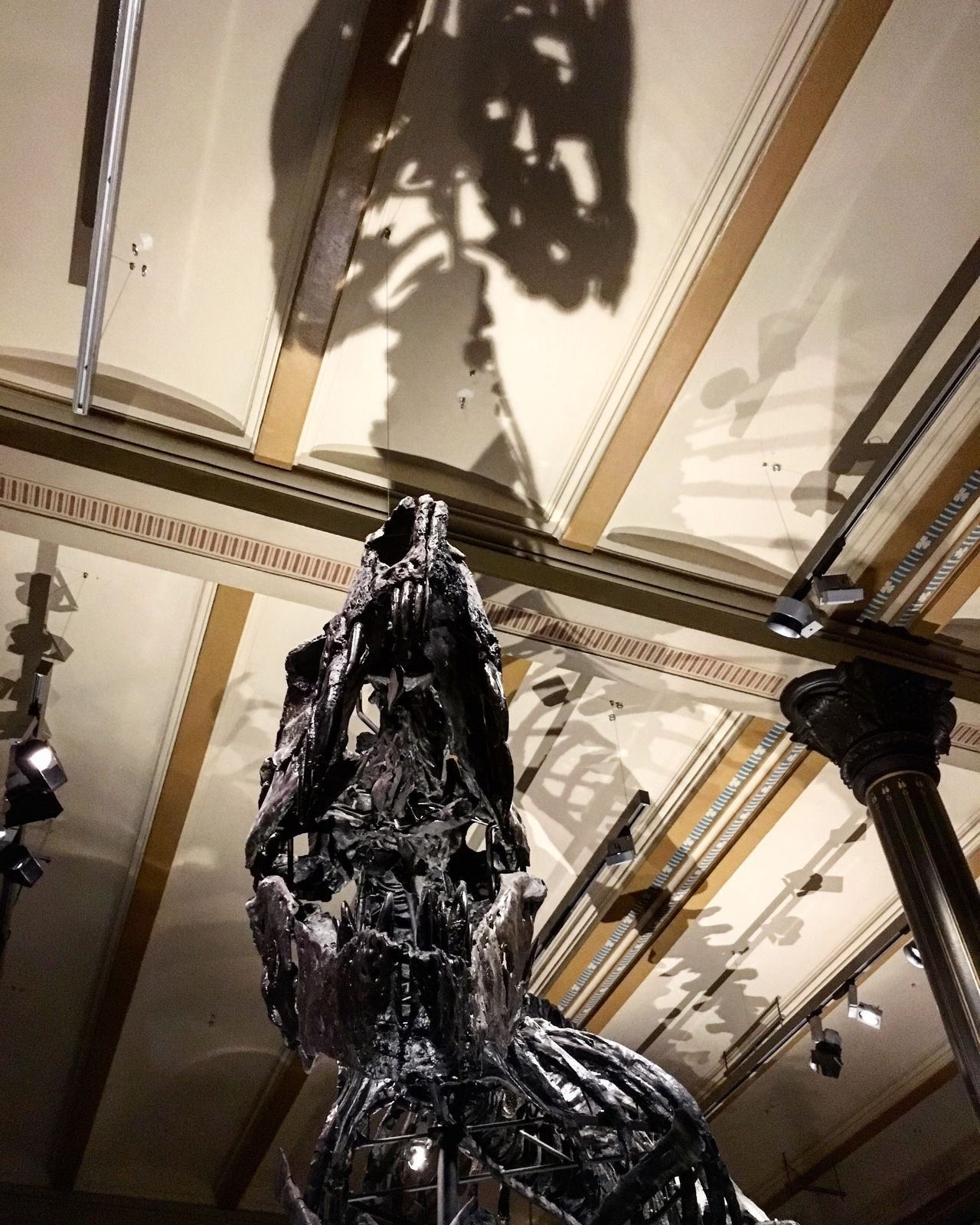 Dinosaur Fossil T-rex Bones Tyrannosaurs Rex Shadow Scary Lookingup
