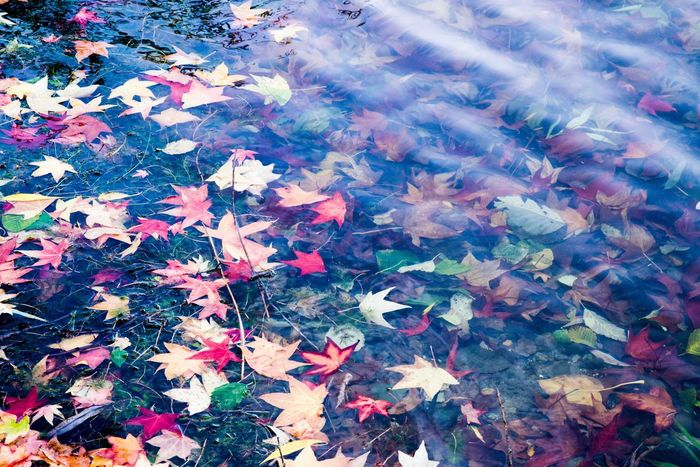 Autumn Leaves OnTheWater And Beneath Asabovesobelow