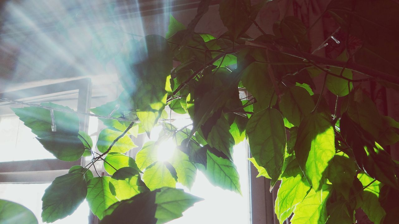Leaf Plant Growth Nature Green Color No People Branch Tree Freshness Beauty In Nature Day Indoors  Close-up EyeEm Russia Window Growth Plant Tree Freshness Beauty In Nature Sky Sunlight Nature Green Color