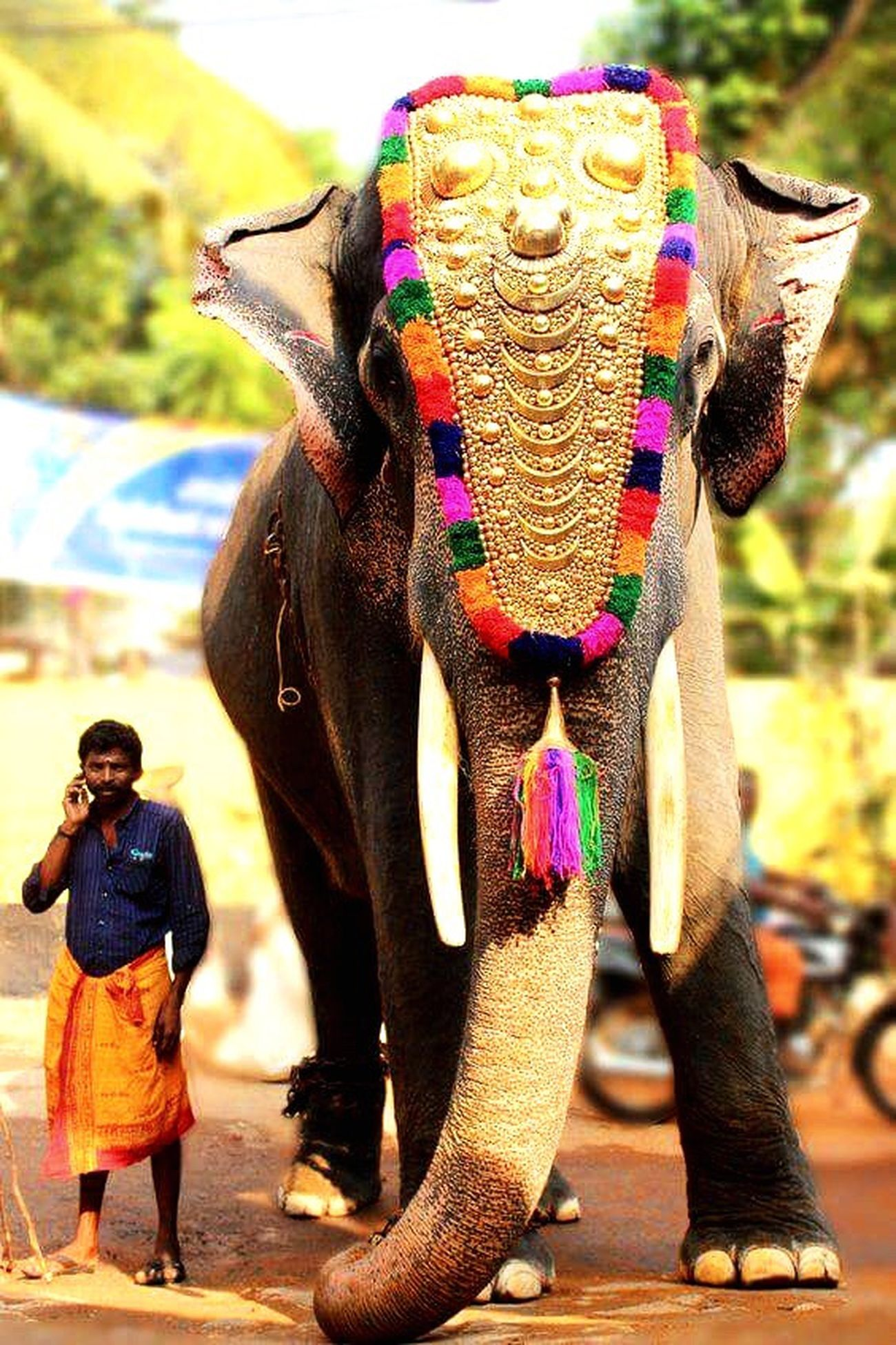 Elephant Tradition First Eyeem Photo