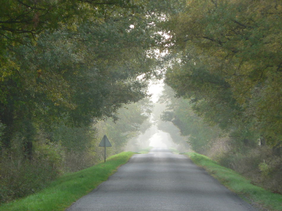 Beauty In Nature Day Nature No People Outdoors Road The Way Forward Tree