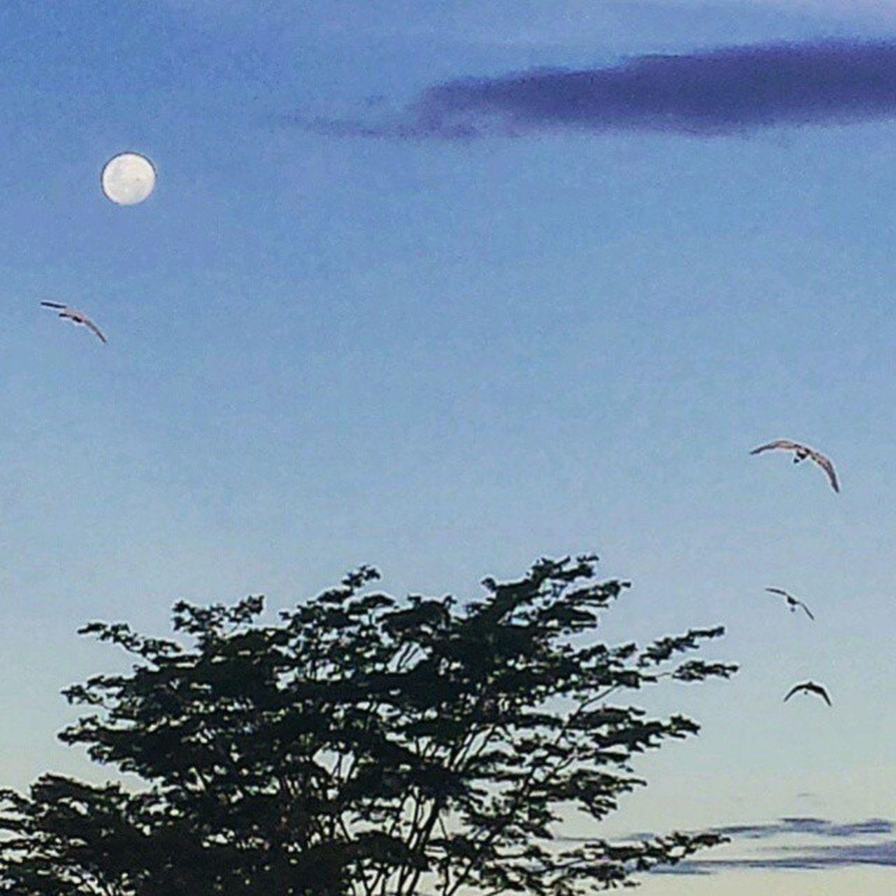 Céu de Mato Grosso... Foto: @lu_poiani _________________________________ Matogrosso MatoGrosso_Brasil Bresil  Brazil Brazilien Brasil World Southamerica America Nature Instagram IloveBrazil CentroOeste MatoGrossoéLindo VisitBrasil Peace