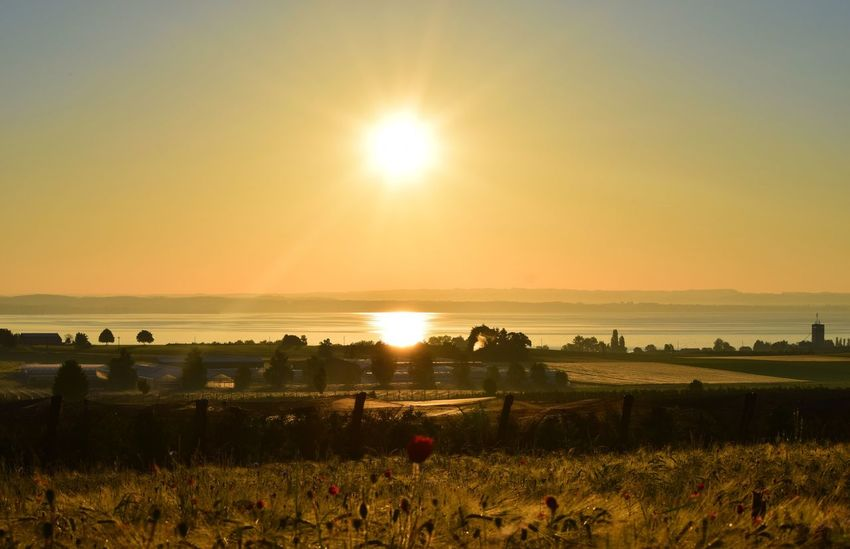 Sun Field Sunset Beauty In Nature Nature Agriculture Sunbeam Sonnenaufgang Bodensee Bodenseebilder Scenics Tranquil Scene Landscape Farm Rural Scene Tranquility Crop  Growth No People Outdoors Tree Grass