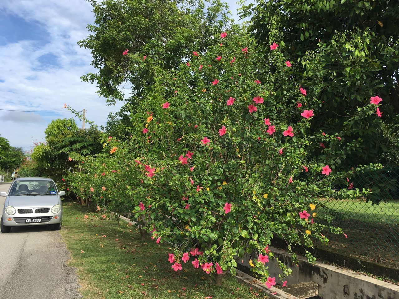 Tree Growth Flower Transportation Nature Plant Land Vehicle No People Day Outdoors Beauty In Nature Fragility Freshness Sky Pahang, Malaysia Flowers Hibiscus Landscape Street Tranquility Tranquil Scene Beauty In Nature Green Color Malaysia Nature