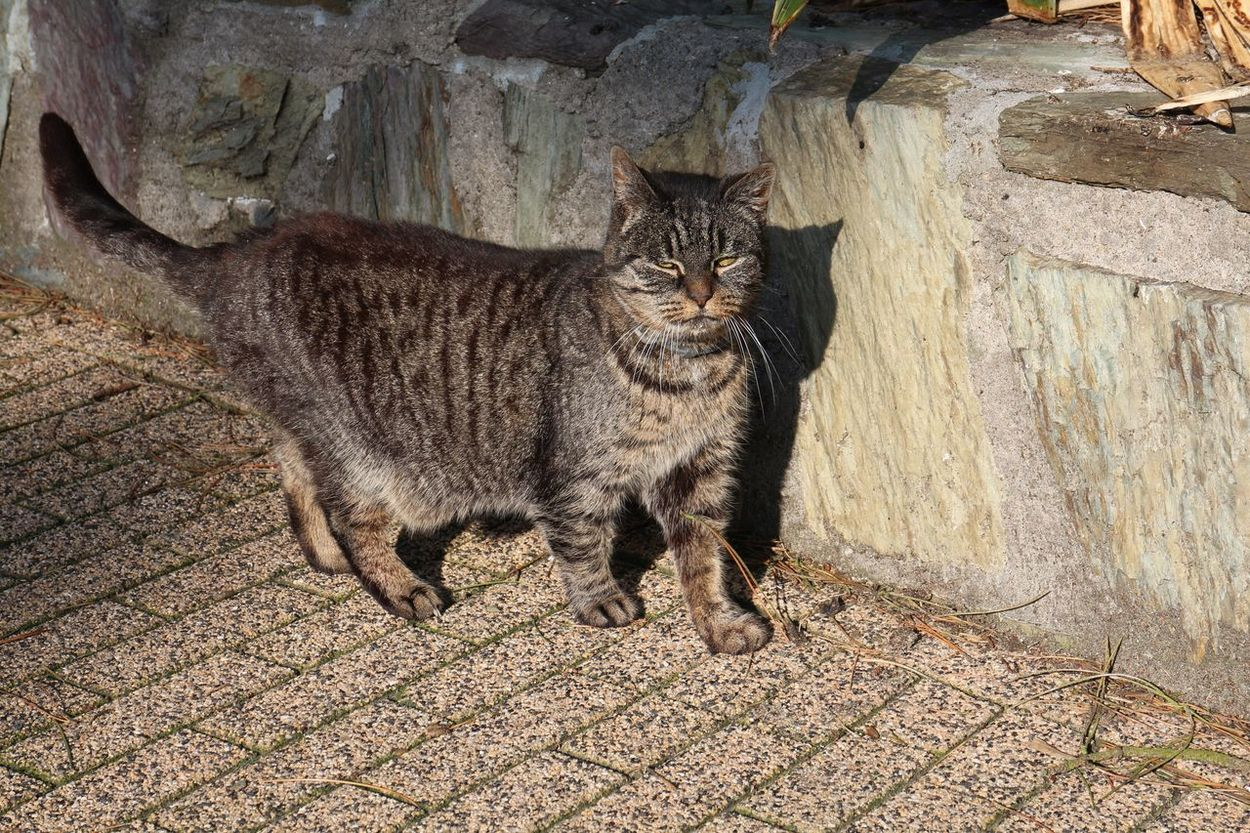 Cat Cyprus Cat Feline Pet Hunter Just Walking Just Chillin' Hello World Relaxed As A Pussycat Pussycat