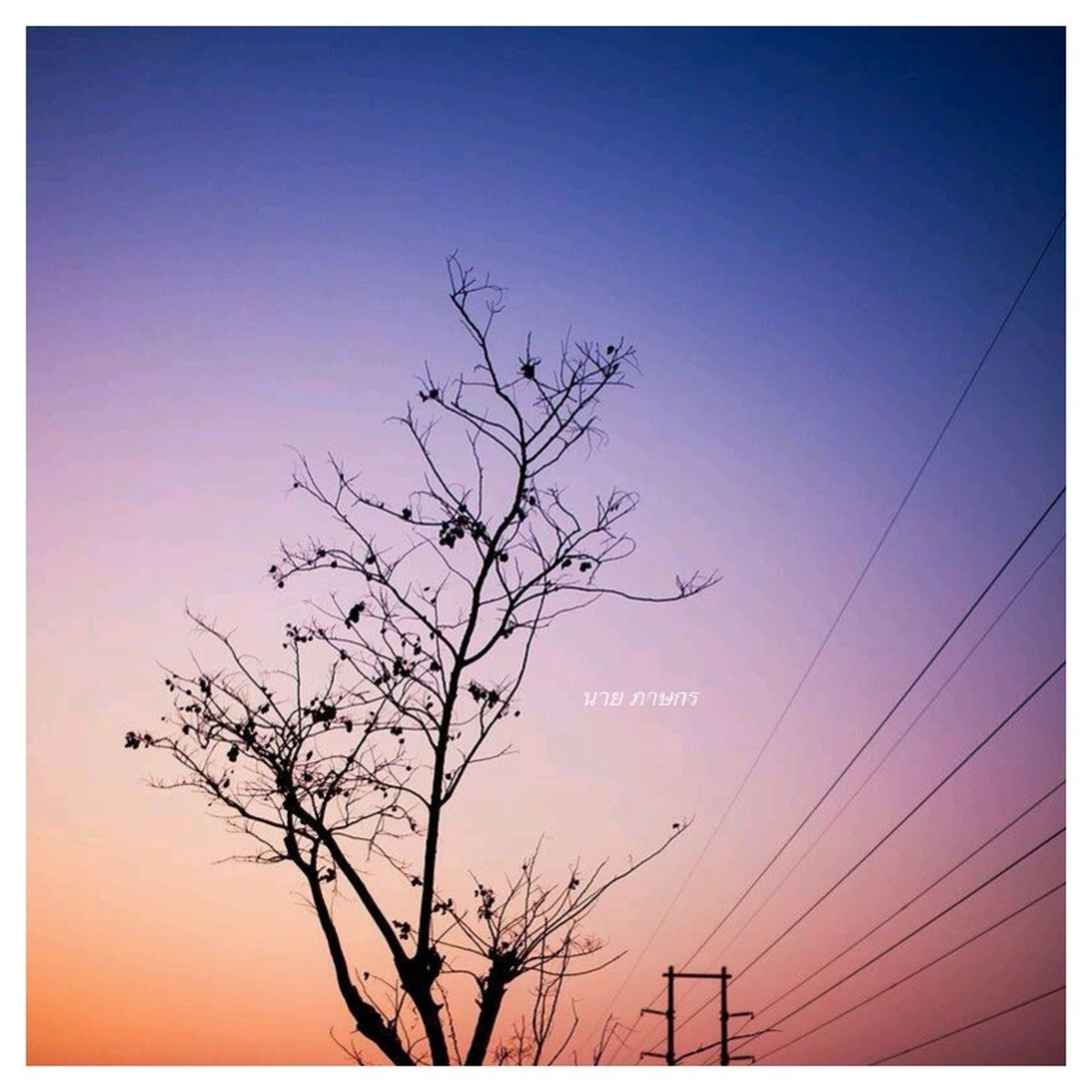 transfer print, bare tree, silhouette, low angle view, auto post production filter, tranquility, tree, branch, sunset, sky, power line, beauty in nature, scenics, nature, tranquil scene, clear sky, electricity pylon, blue, outdoors, no people