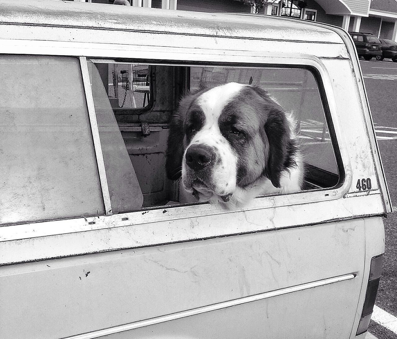 Dogs in Car Window Series -1 EyeEm Masterclass AMPt Community Black & White EyeEmBestPics
