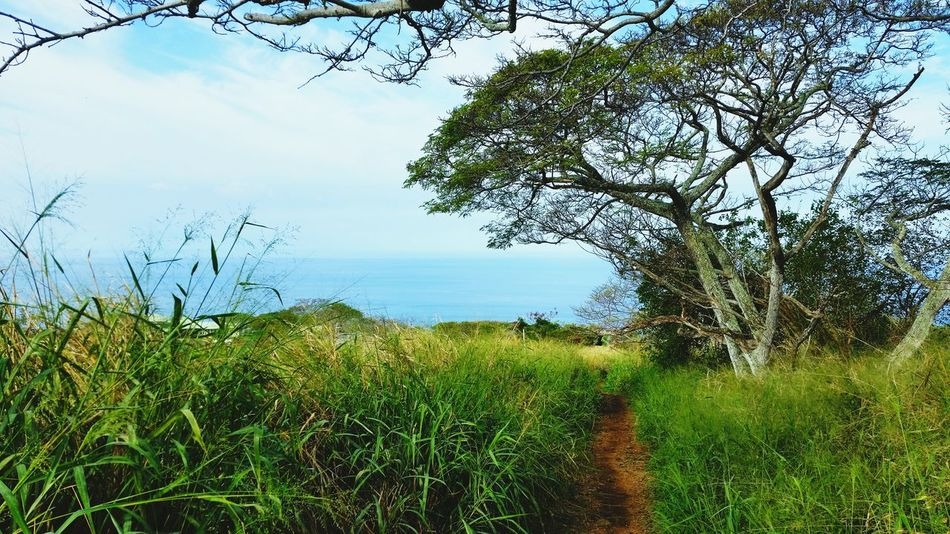 Hawaii Hike Captain Cook Clouds And Sky Napo'opo'o Ocean View Ocean