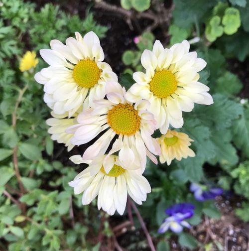 Flower Petal Fragility Flower Head Beauty In Nature Blooming Heart Shape