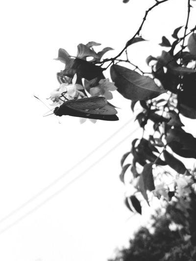 Tree Flower Flying The Week On EyeEm