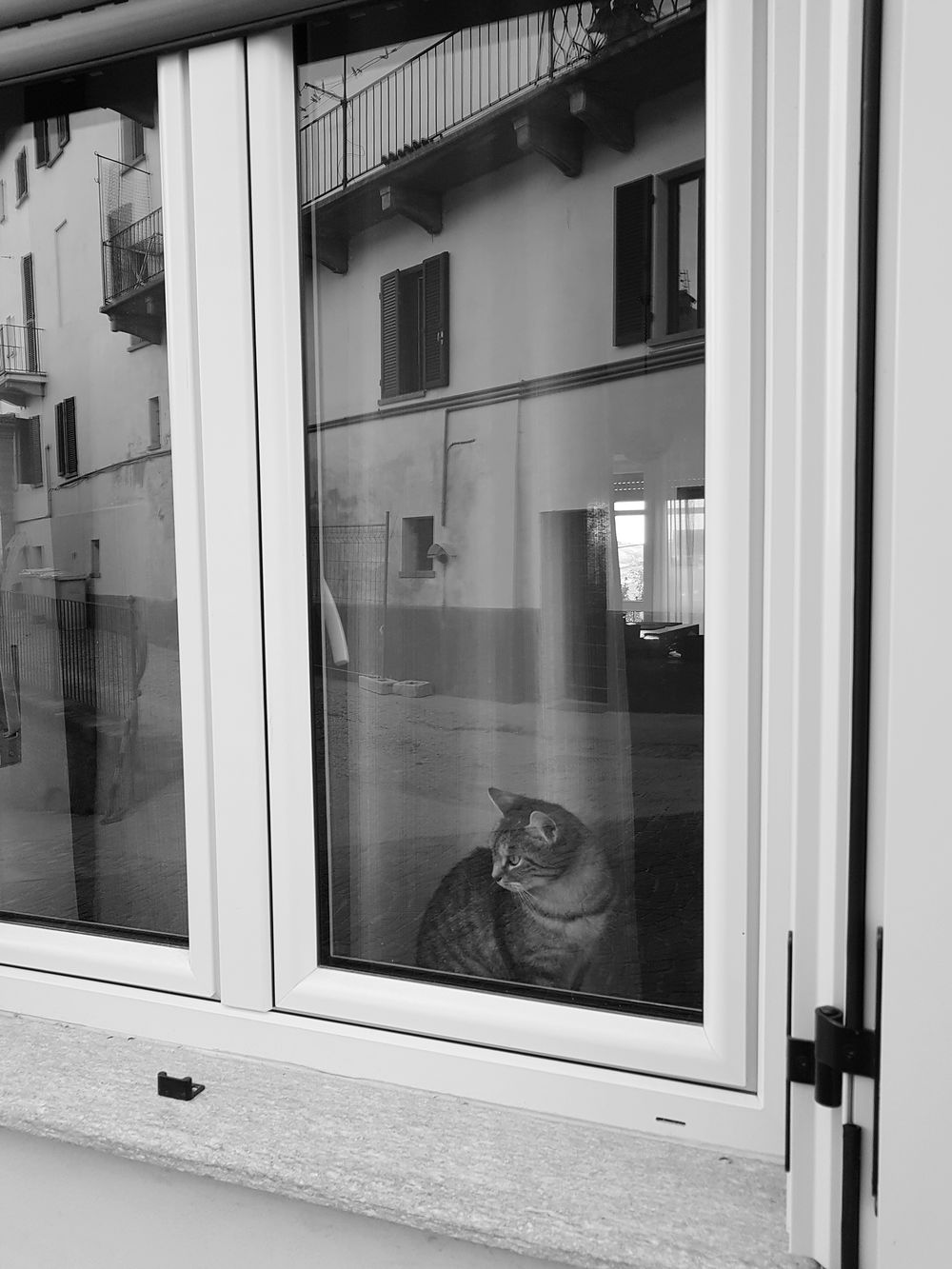 Cat At Window Reflection In The Street Langhe Tranquility EyeEm Selects Window Built Structure Architecture Building Exterior Day Old-fashioned No People Close-up