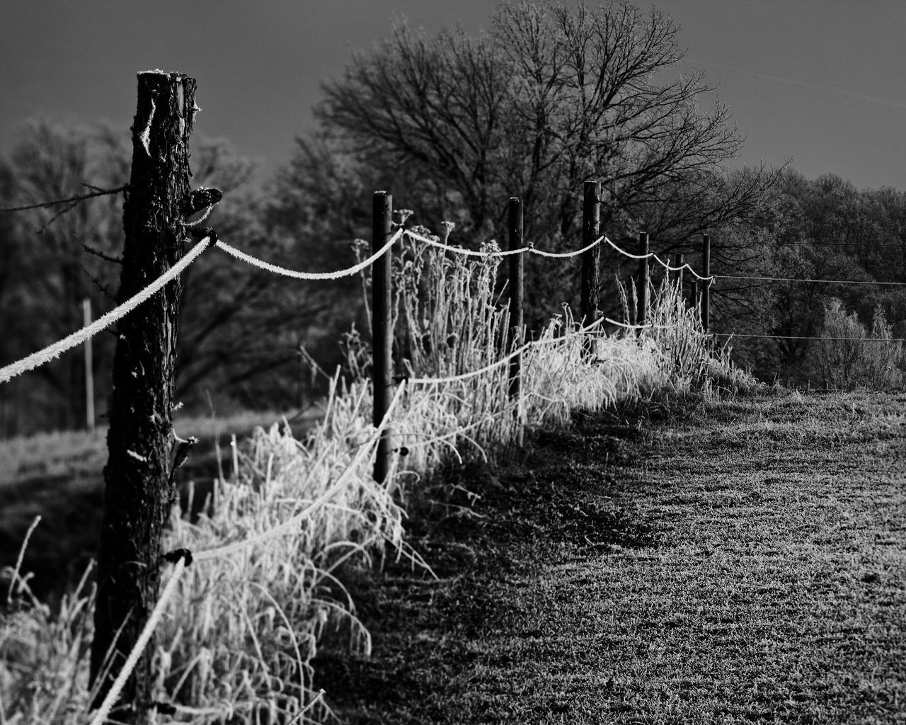 Nature Tree Bare Tree No People Growth Tranquility Outdoors Plant Beauty In Nature Grass Day Sky White Frost Frozen Nature Fence Posts Glowing EyeEmNewHere EyeEmNewHere