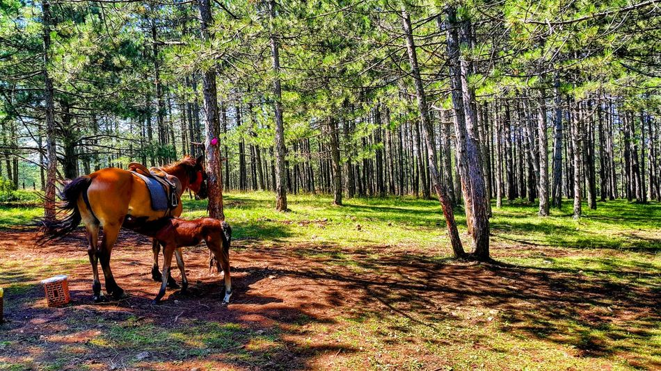 Horses Animal Mountain Grass Mom And Baby Nature Trees