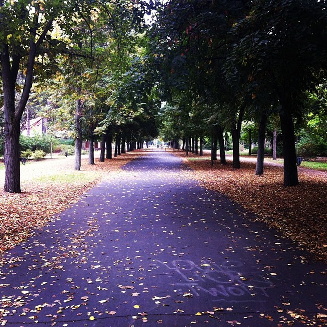 ♥♥♥ Instlike_com Gifts 20likes ♥♥♥ Forest Tree Trees Road Autumn