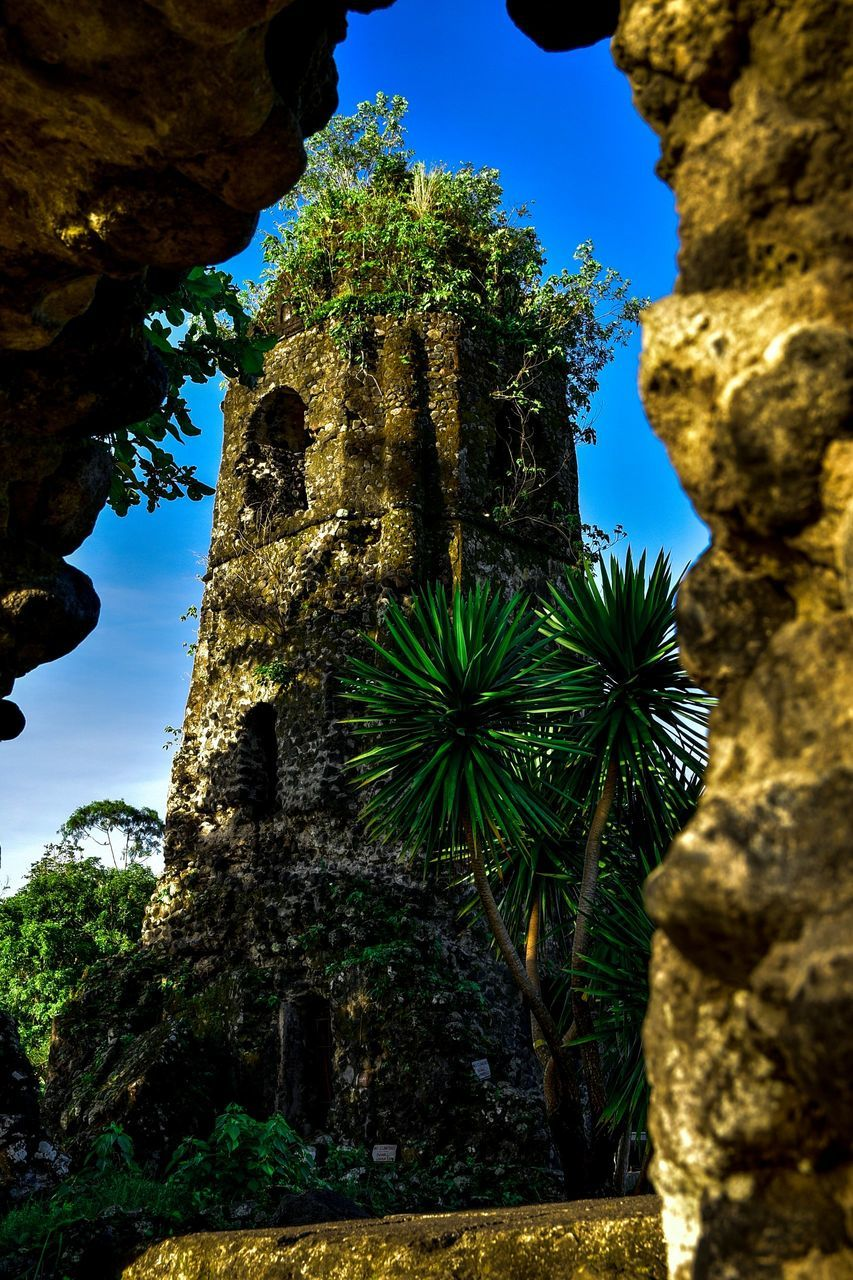 rock - object, no people, growth, nature, low angle view, beauty in nature, plant, day, outdoors, cactus, tree, architecture, sky