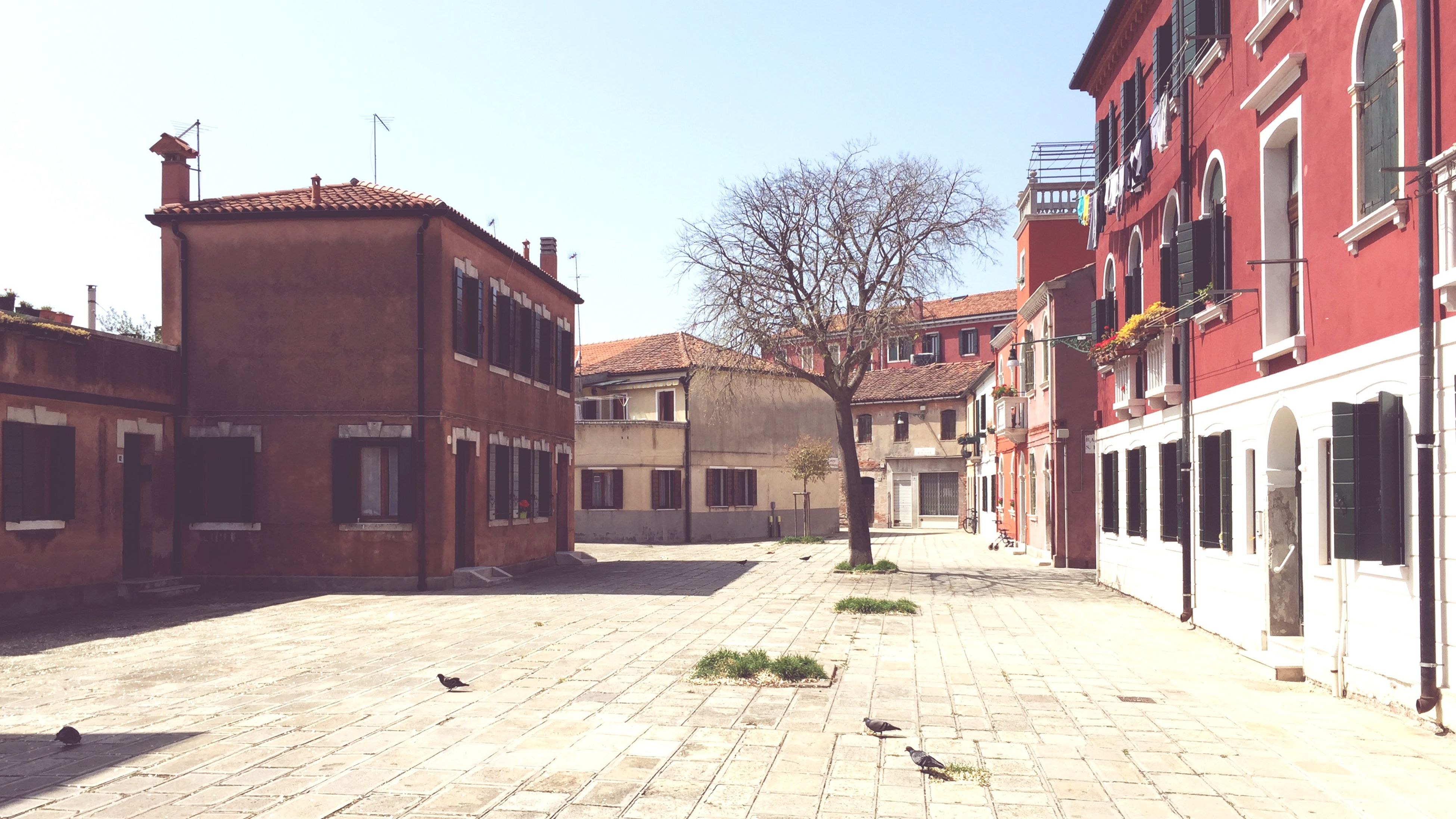 building exterior, architecture, built structure, clear sky, house, residential structure, residential building, street, cobblestone, the way forward, building, bare tree, city, day, outdoors, tree, window, sunlight, sky, no people