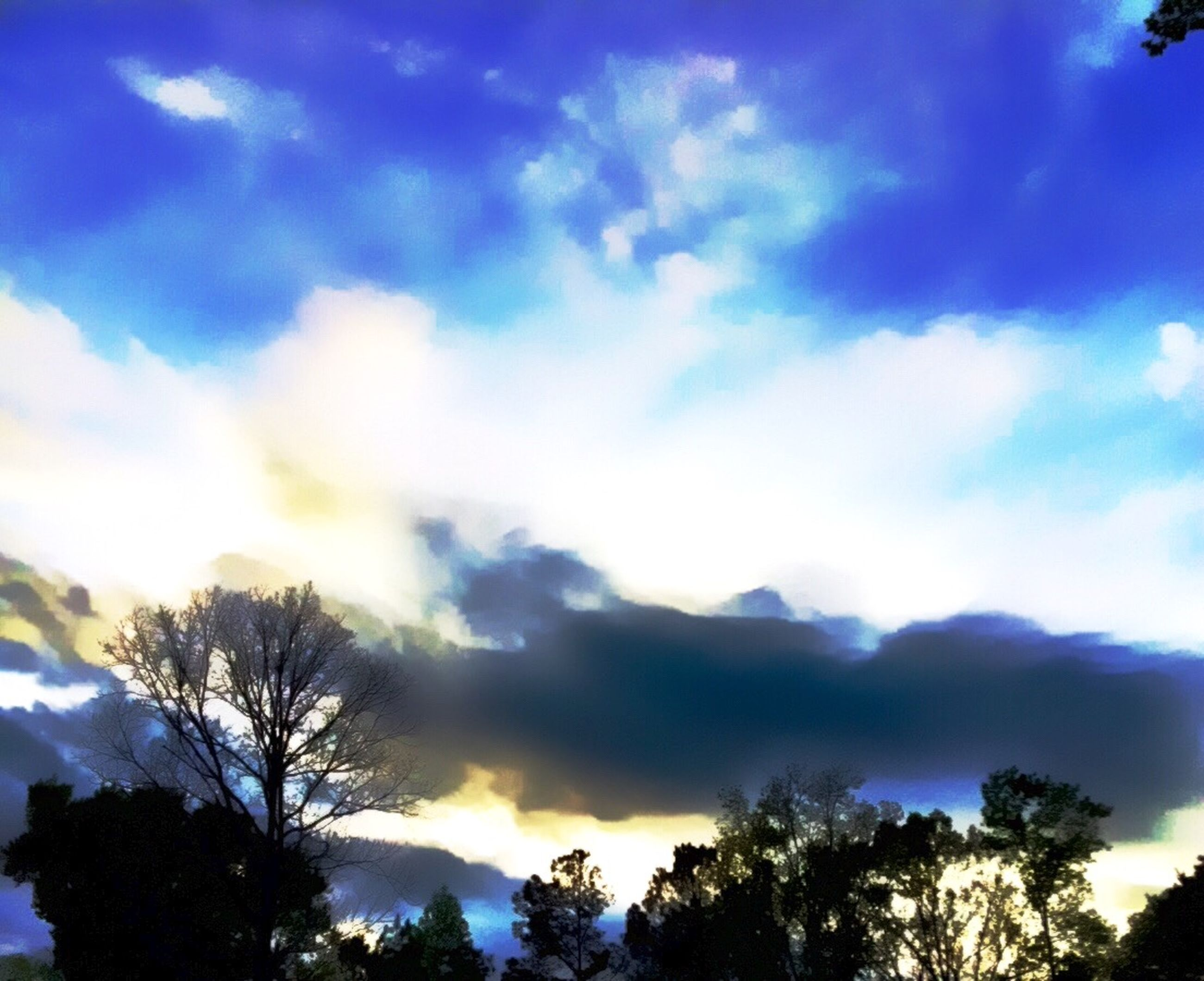 tree, low angle view, sky, silhouette, cloud - sky, beauty in nature, tranquility, scenics, nature, blue, cloud, tranquil scene, cloudy, branch, bare tree, high section, outdoors, no people, growth, sunset