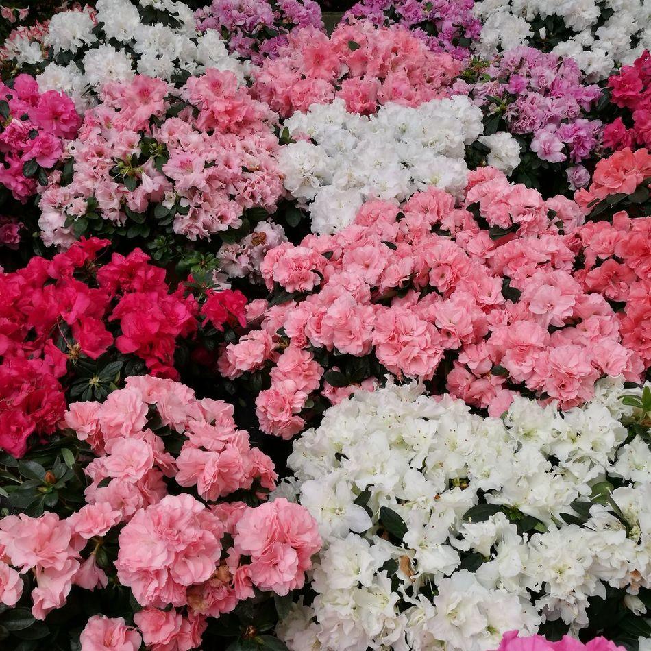 First Eyeem Photo Flowers Pink