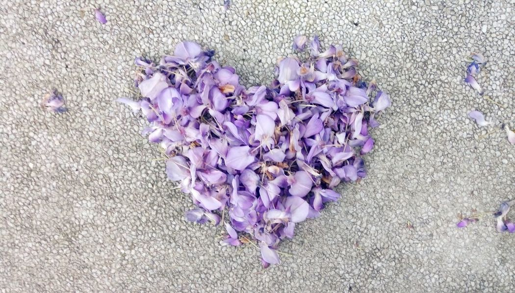 Purple Flower Petal Fragility Nature Beauty In Nature Day Growth High Angle View Outdoors Plant Flower Head Blooming No People Freshness Petunia Close-up Crocus Heart Flower
