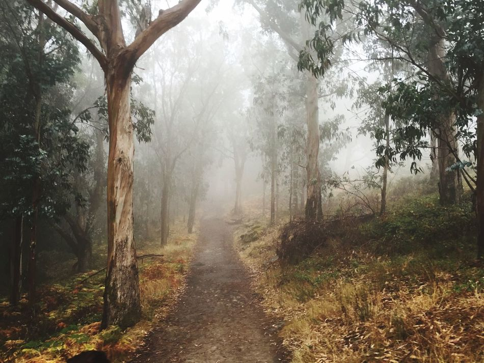 Fog Tree Nature Weather Scenics Outdoors Day Beauty In Nature Tranquil Scene Forest Tranquility Landscape No People