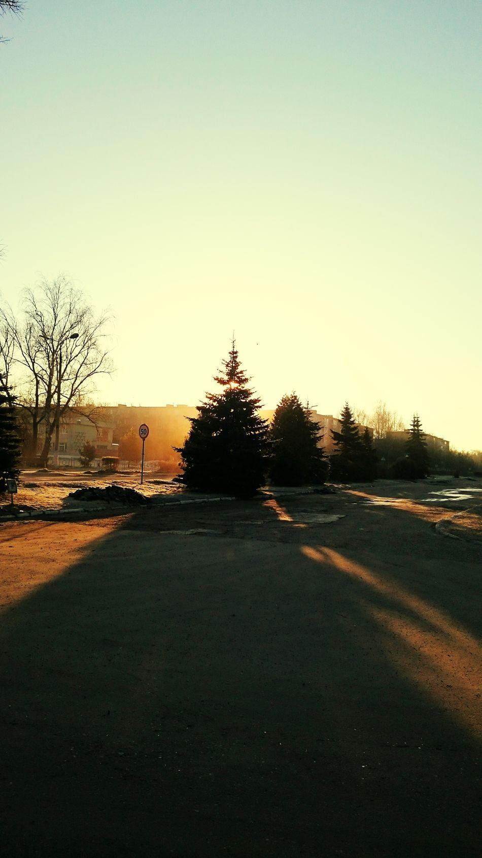 Утро!!! Солнышко за елку зацепилось:-)