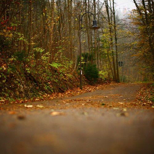 Autumnway Way Morning Justwalk walk germany 너를 만나고 헤어진 다음 난 한참을 걸었어 지금 보이지 않더라고 넌 내곁에 있을거라고 그게 4년이 되었구나 잘 지내! 내가 만나러 갈테니